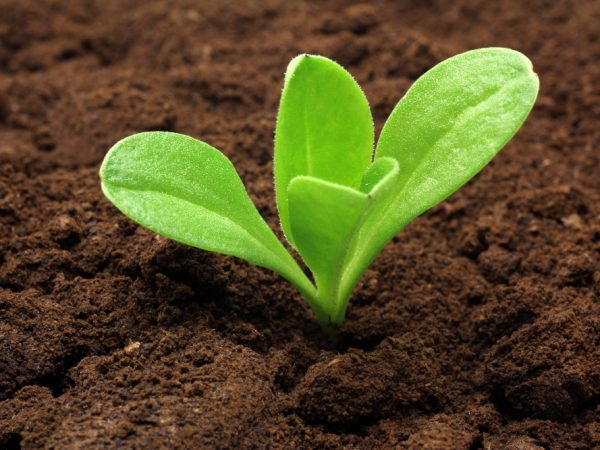 Wie lange ist Saatgut haltbar?