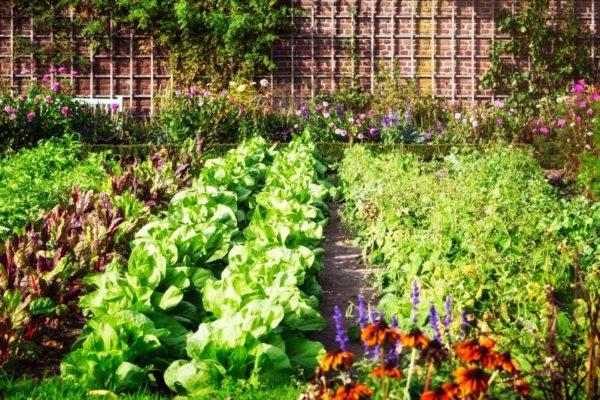 Große Ernte im kleinen Garten