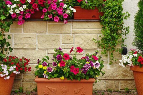 Blumekästen auf dem Balkon