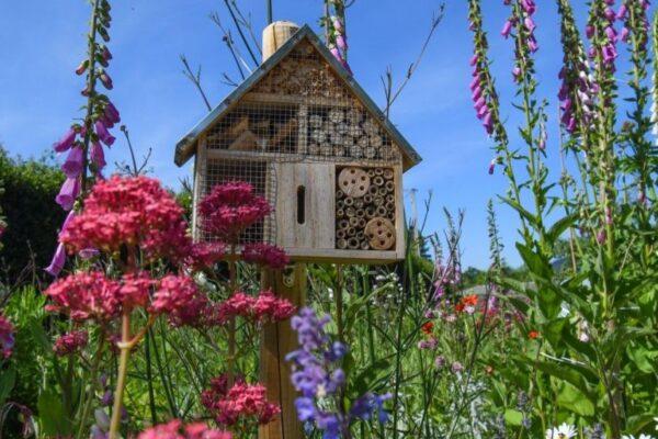 Insekten im Garten