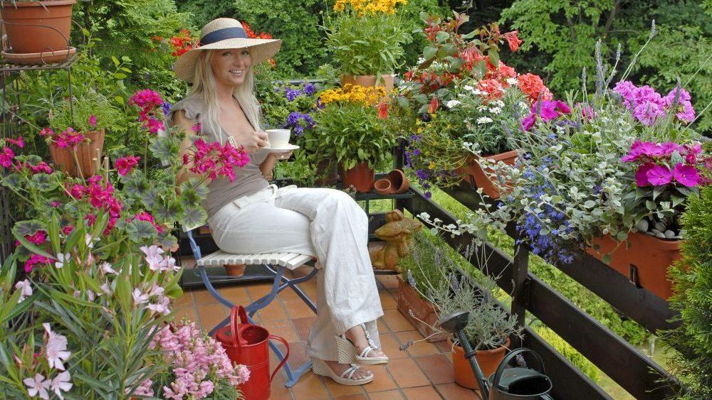 Sommerblumen für den Balkon