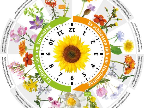 Die Blumenuhr – ein raffinierter Blumenschmuck