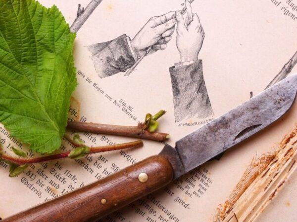 Obstbaum veredeln: Die Schritt-für-Schritt-Anleitung