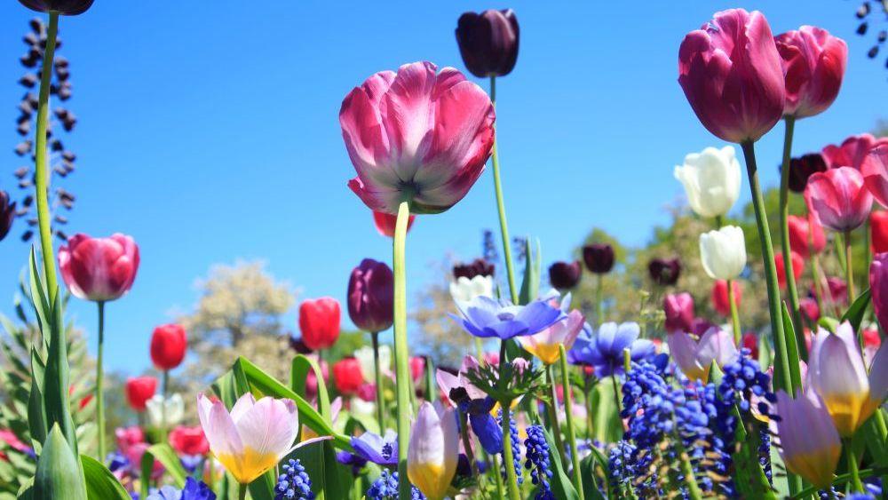 Blumenwiese im Frühling