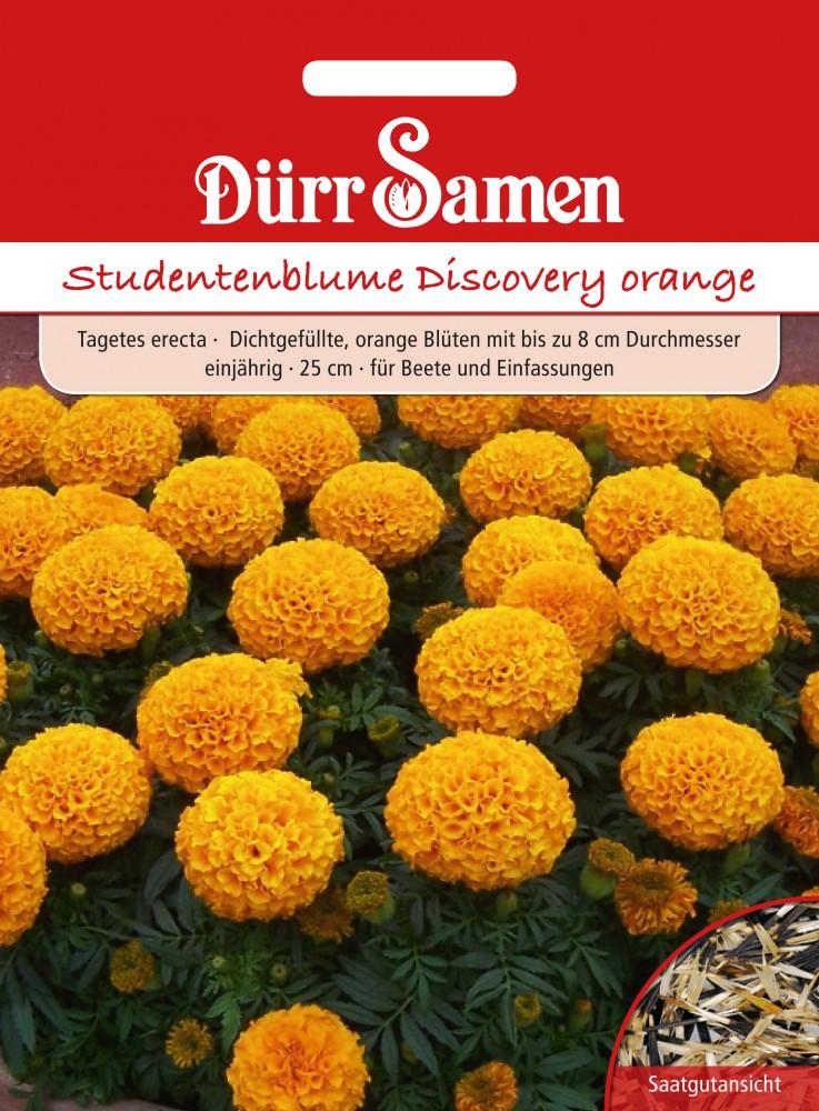 studentenblume discovery orange von d rr samen. Black Bedroom Furniture Sets. Home Design Ideas