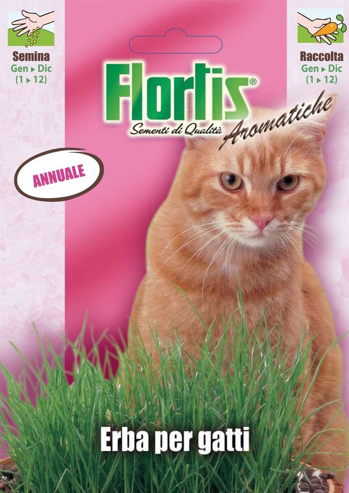 Kr utersamen katzengras von flortis for Erba per gatti